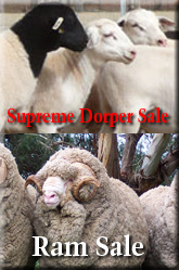 Supreme Dorper and Ram Sale