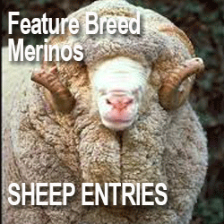 SHEEP_ENTRIES.PNG